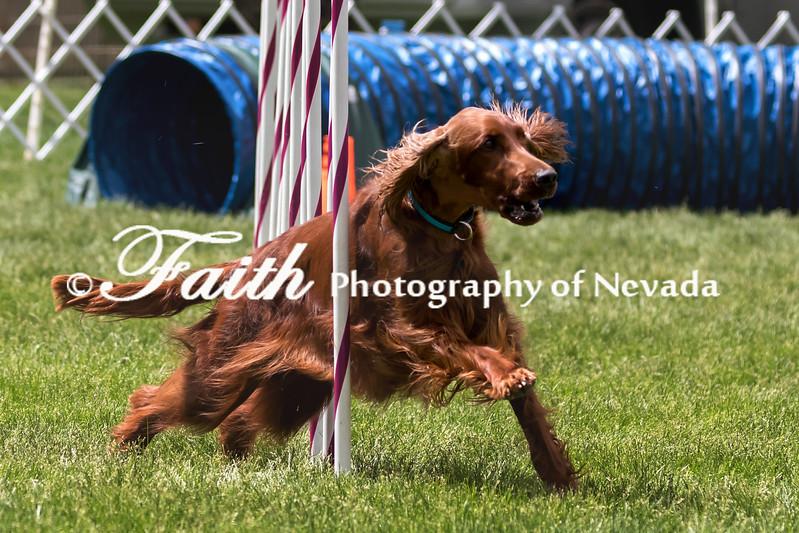 Agility ARC Nationals May 15 2017MelissaFaithKnightFaithPhotographyNV_8657