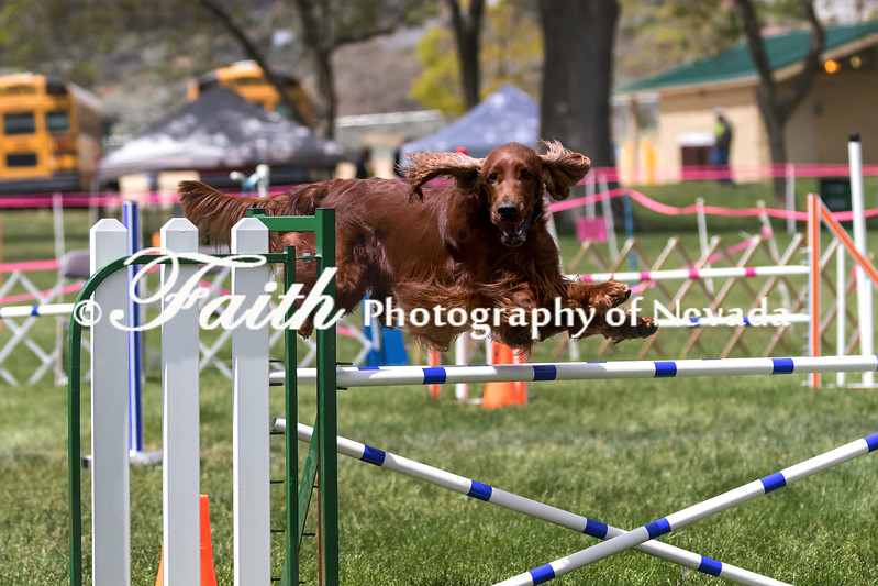 Agility ARC Nationals May 15 2017MelissaFaithKnightFaithPhotographyNV_8683