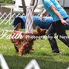 Agility ARC Nationals May 15 2017MelissaFaithKnightFaithPhotographyNV_8664