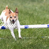 Agility ARC Nationals May 15 2017MelissaFaithKnightFaithPhotographyNV_7739