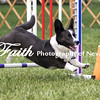 Agility ARC Nationals May 15 2017MelissaFaithKnightFaithPhotographyNV_7715