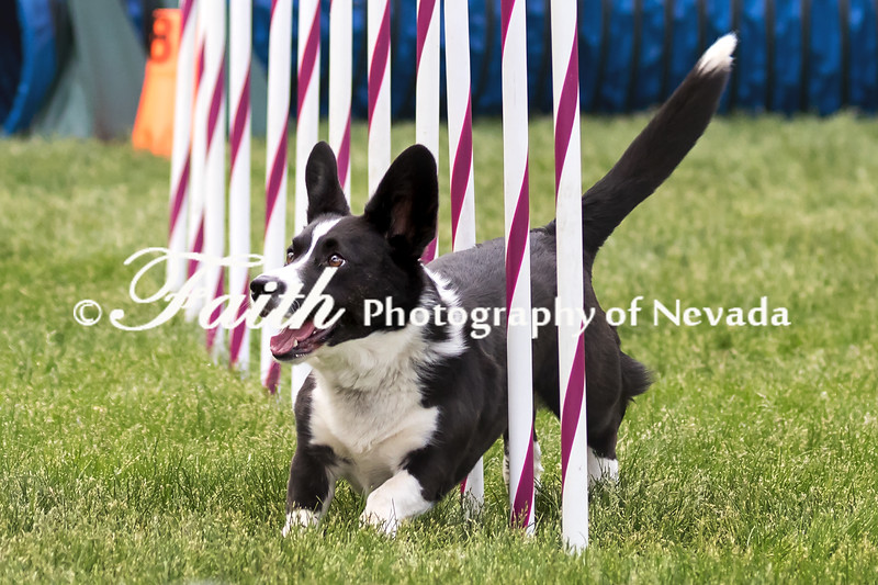 Agility ARC Nationals May 15 2017MelissaFaithKnightFaithPhotographyNV_7706