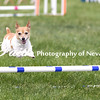 Agility ARC Nationals May 15 2017MelissaFaithKnightFaithPhotographyNV_7737