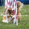 Agility ARC Nationals May 15 2017MelissaFaithKnightFaithPhotographyNV_9074