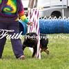 Agility ARC Nationals May 15 2017MelissaFaithKnightFaithPhotographyNV_8998