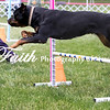Agility ARC Nationals May 15 2017MelissaFaithKnightFaithPhotographyNV_9015