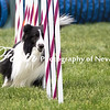 Agility ARC Nationals May 15 2017MelissaFaithKnightFaithPhotographyNV_9097