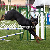 Agility ARC Nationals May 15 2017MelissaFaithKnightFaithPhotographyNV_9011