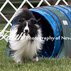Agility ARC Nationals May 15 2017MelissaFaithKnightFaithPhotographyNV_9095