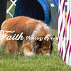 Agility ARC Nationals May 15 2017MelissaFaithKnightFaithPhotographyNV_9062