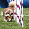 Agility ARC Nationals May 15 2017MelissaFaithKnightFaithPhotographyNV_9070