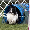 Agility ARC Nationals May 15 2017MelissaFaithKnightFaithPhotographyNV_9093