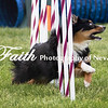 Agility ARC Nationals May 15 2017MelissaFaithKnightFaithPhotographyNV_9032