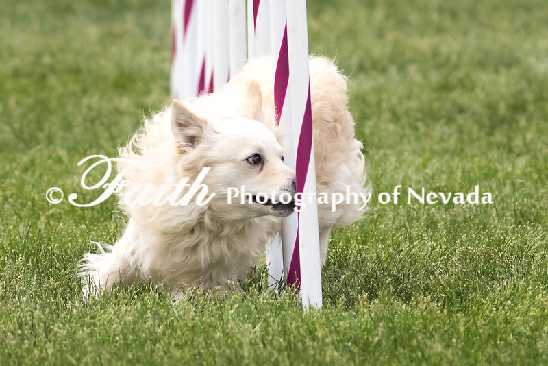 Agility ARC Nationals May 15 2017MelissaFaithKnightFaithPhotographyNV_9145
