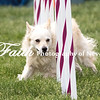 Agility ARC Nationals May 15 2017MelissaFaithKnightFaithPhotographyNV_9138