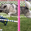 Agility ARC Nationals May 15 2017MelissaFaithKnightFaithPhotographyNV_8969