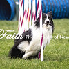 Agility ARC Nationals May 15 2017MelissaFaithKnightFaithPhotographyNV_9105