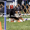 Agility ARC Nationals May 15 2017MelissaFaithKnightFaithPhotographyNV_9035