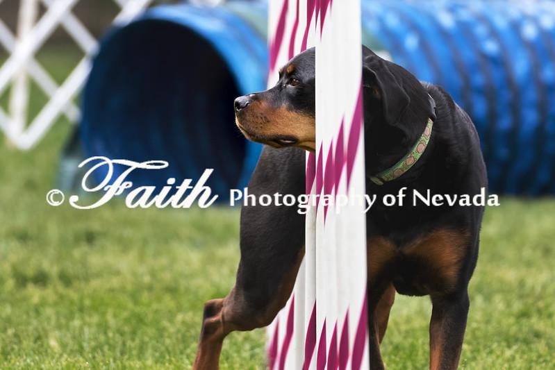 Agility ARC Nationals May 15 2017MelissaFaithKnightFaithPhotographyNV_9286