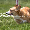 Agility ARC Nationals May 15 2017MelissaFaithKnightFaithPhotographyNV_8915