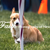 Agility ARC Nationals May 15 2017MelissaFaithKnightFaithPhotographyNV_8908