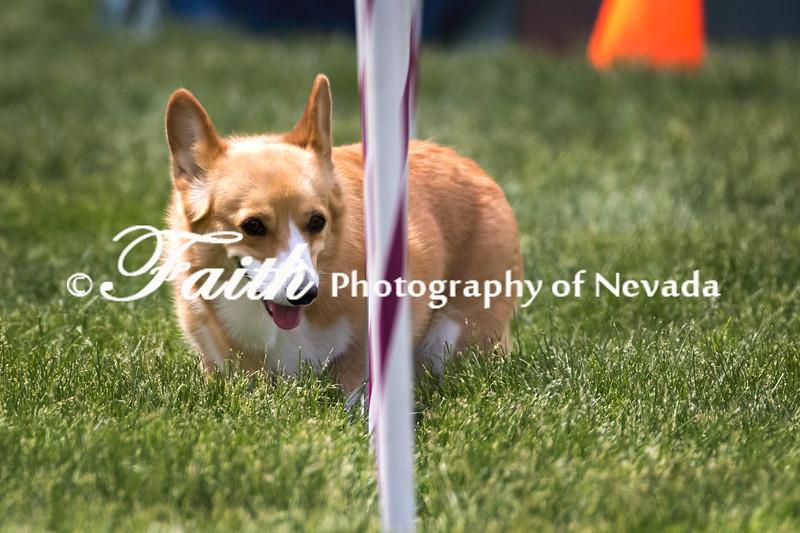 Agility ARC Nationals May 15 2017MelissaFaithKnightFaithPhotographyNV_8910