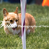 Agility ARC Nationals May 15 2017MelissaFaithKnightFaithPhotographyNV_8910