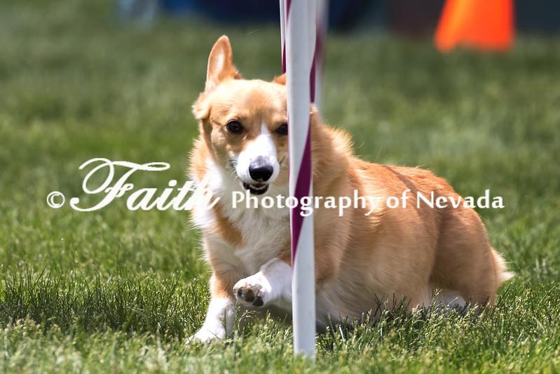 Agility ARC Nationals May 15 2017MelissaFaithKnightFaithPhotographyNV_8913