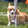 Agility ARC Nationals May 15 2017MelissaFaithKnightFaithPhotographyNV_8913