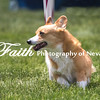 Agility ARC Nationals May 15 2017MelissaFaithKnightFaithPhotographyNV_8914