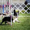 Agility ARC Nationals May 14 2017MelissaFaithKnightFaithPhotographyNV_0634