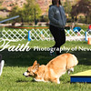 Agility ARC Nationals May 14 2017MelissaFaithKnightFaithPhotographyNV_2511