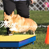 Agility ARC Nationals May 14 2017MelissaFaithKnightFaithPhotographyNV_2501