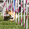 Agility ARC Nationals May 14 2017MelissaFaithKnightFaithPhotographyNV_2497