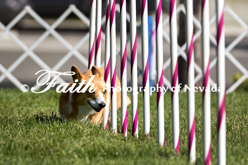 Agility ARC Nationals May 14 2017MelissaFaithKnightFaithPhotographyNV_2484