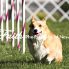 Agility ARC Nationals May 14 2017MelissaFaithKnightFaithPhotographyNV_2500