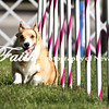 Agility ARC Nationals May 14 2017MelissaFaithKnightFaithPhotographyNV_2486