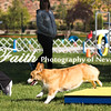Agility ARC Nationals May 14 2017MelissaFaithKnightFaithPhotographyNV_2509