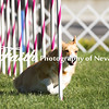 Agility ARC Nationals May 14 2017MelissaFaithKnightFaithPhotographyNV_2503