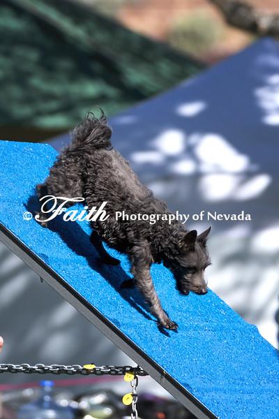 Agility ARC Nationals May 14 2017MelissaFaithKnightFaithPhotographyNV_2538