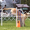 Agility ARC Nationals May 14 2017MelissaFaithKnightFaithPhotographyNV_3927