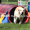 Agility ARC Nationals May 14 2017MelissaFaithKnightFaithPhotographyNV_3922