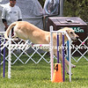 Agility ARC Nationals May 14 2017MelissaFaithKnightFaithPhotographyNV_3928
