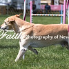 Agility ARC Nationals May 14 2017MelissaFaithKnightFaithPhotographyNV_3925