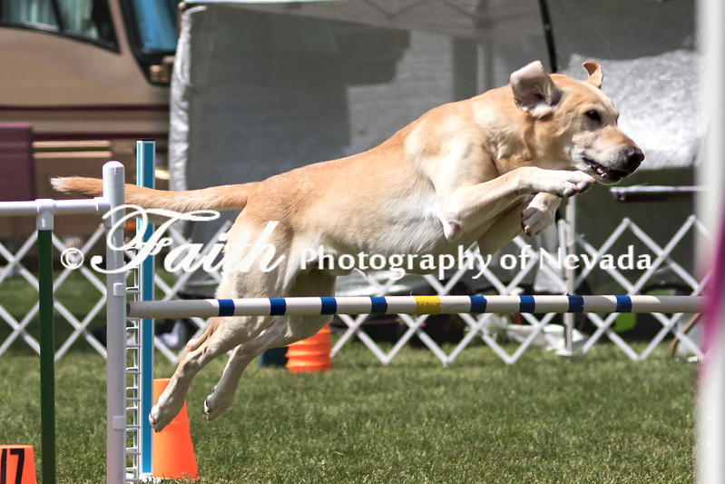 Agility ARC Nationals May 14 2017MelissaFaithKnightFaithPhotographyNV_3917