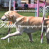 Agility ARC Nationals May 14 2017MelissaFaithKnightFaithPhotographyNV_3926