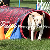 Agility ARC Nationals May 14 2017MelissaFaithKnightFaithPhotographyNV_3923