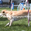 Agility ARC Nationals May 14 2017MelissaFaithKnightFaithPhotographyNV_3924