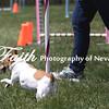 Agility ARC Nationals May 14 2017MelissaFaithKnightFaithPhotographyNV_3975