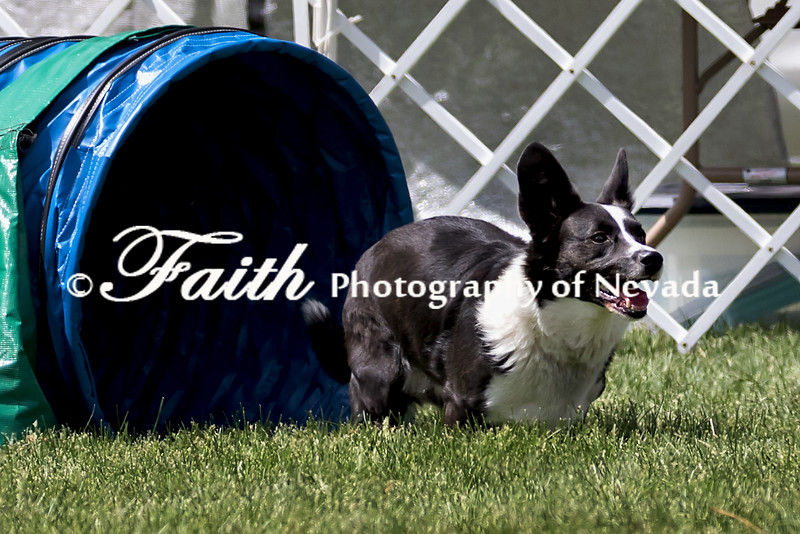 Agility ARC Nationals May 14 2017MelissaFaithKnightFaithPhotographyNV_3942